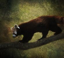 R is for.....Red Panda by Lissywitch