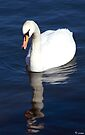 The Ugly Duckling.... by imagic