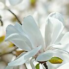 White Pastel Floral art prints Magnolia Tree Flower Baslee Troutman by BasleeArtPrints