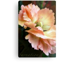 Carnations and Falling In Love Metal Print