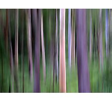 Purple Forest Impression Photographic Print