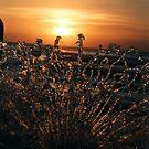 Fontana on Sea Sunset  by ASSA