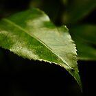 Leafy Surprise by brucejohnson