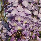 Busy Bumble Bee and Wisteria by Rebecca Glenn