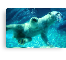 NC Polar Bear Canvas Print