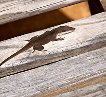 Garden lizard on the glider by Ann Reece