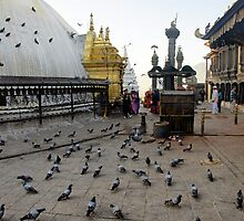 Pigeon Puja by Harry Oldmeadow