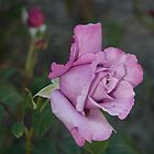The Rose... by michellerena