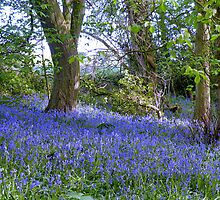 Natures Garden : BlueBell Woods by AnnDixon