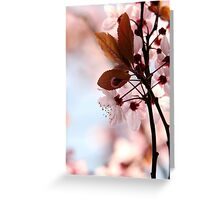 Cherry Pinks Greeting Card