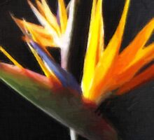 Cut Bird of Paradise Flowers 1 Painterly by Christopher Johnson