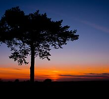 Sunset at Ashdown Forrest, Sussex by Eddie Howland