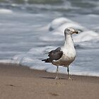 Stroll on the beach by Robert Douglas