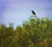 Grackle on Juniper by AnnaLouise