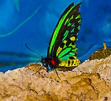 Beautiful Black and Green Butterfly by Autumn-Leann