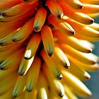Spanish flower in yellowish colours by marina63