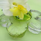Daffodils, and Glass Daisy  by NatureGreeting Cards ccwri