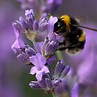 Busy Bee! by Mark Hughes