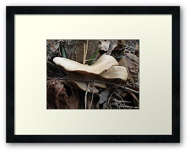 SHELF FUNGUS - CREEKSIDE by May Lattanzio