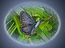 Digital Butterfly - Eastern Tailed-Blue by MotherNature