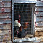 The Coop by smalletphotos
