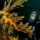 Leafy Seadragon and diver by Deb Aston