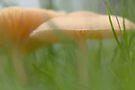 Mushroom jungle by Jocelyn  Parry-Jones