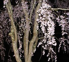 Pink Blossoms Cascading In The Night by daphsam