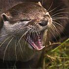 Otter by John Dickson