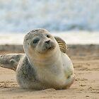 Seal by John Dickson