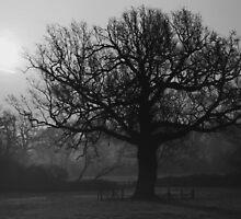 Old oak by Doug McRae
