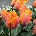 Arrived tulips by Ana Belaj