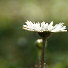 Lonely Daisy by marens