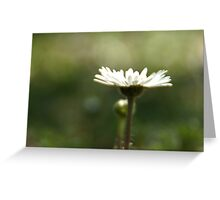 Lonely Daisy Greeting Card