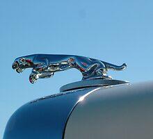 Vintage Jaguar by PaulaKlavins