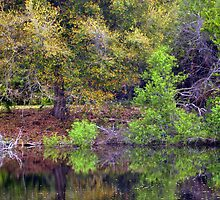 The Pond by Kim McClain Gregal