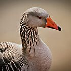 Father Goose by A Different Eye Photography