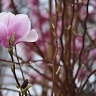 Spring budding by qarrie
