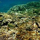 Abundance of Marine life - Lady Elliot Island  by AmyLee2694