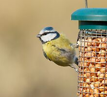 Blue tit 1 by Richard Bowler