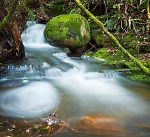 Myrtle Gully Rivulet, Tasmania #6 by Chris Cobern