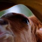 Milk bar by Penny Kittel