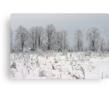 Grassland in winter time Canvas Print