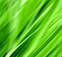 Green!!! by Andrea Meyer