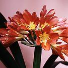 Blooming orange flowers by contradirony