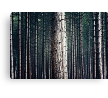 Patterns in Nature Canvas Print