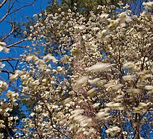 Breeze Through the Dogwood Tree by BrianDawson