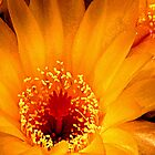 Small Yellow Cactus Flower by ©  Paul W. Faust