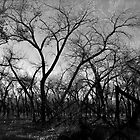 Black and White Bosque II by scottmarla