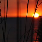 Grasses at Sunset by Barry Goble